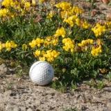 Golf 62